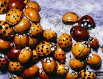 Population variation in ladybugs