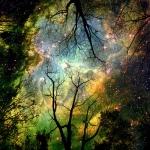 Cosmos-through-trees