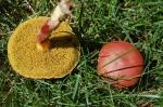mushroom image: Joel Duff