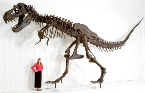 T-rex-replica-person-scale-dinosaur