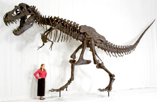 Did T Rex Really Have Tiny Arms  Historical Science and Creationism   Naturalis Historia