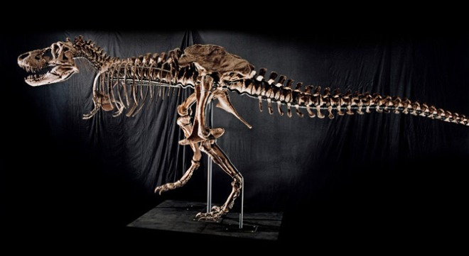 A T-rex skeleton showing again showing the small arms.