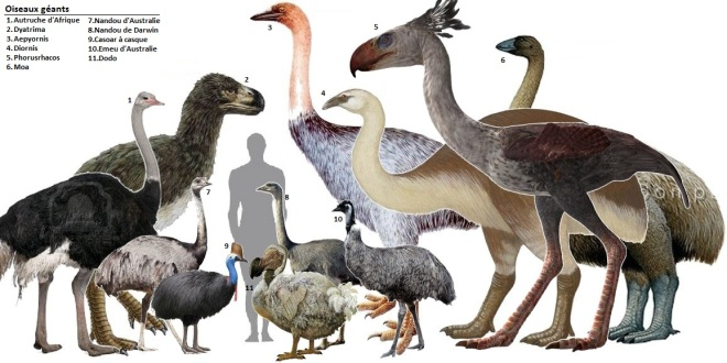 Image linked from:  http://getouterspace.tumblr.com/post/25857819106/giant-birds-camelidae-and-giraffidae