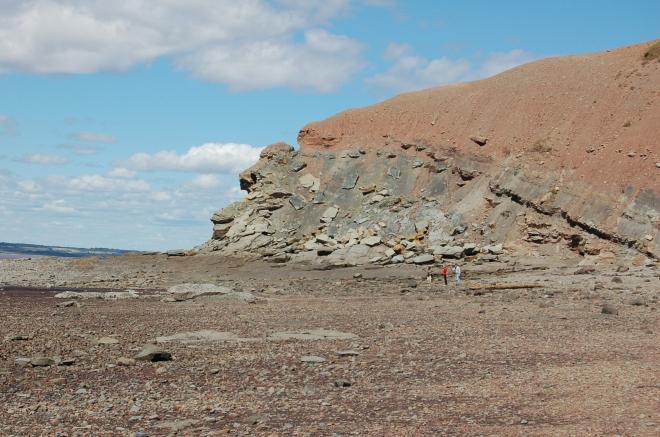 Joggins-fossil-cliffs-low-tide