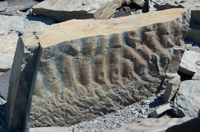 Here is a block of rock with clear ripple marks providing evidence there was once an ancient shore here.   Image credit: Joel Duff
