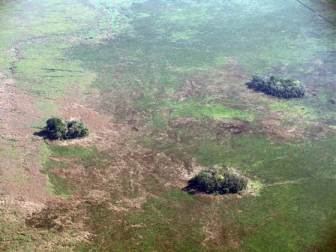 An example of forest islands on a flood plane in central Bolivia.  These islands had been thought to have formed from natural (non-human induced) processes but now some have been shown to be the result of human activity.