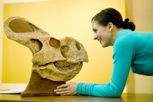 Conservator Felicity Bolton with a Protoceratops skull at the Fossil Folklore exhibition at the Walter Rothschild Zoological Museum, Tring.