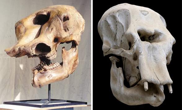 [Image: mastodon-skull-cyclops.jpg]