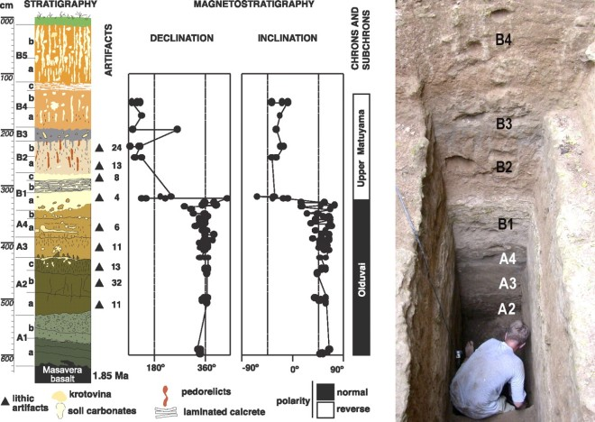 Stratigraphy and archaeological discoveries in Unit M5. The 6.2-m section shows that Dmanisi's sedimentary/geomagnetic record spans the late Olduvai subchron (stratum A) through earliest Upper Matuyama chron (stratum B). Test excavations recovered 73 stone artifacts from strata A2–A4, which are firmly dated to 1.85–1.78 Ma.