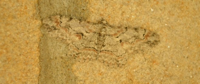 Moth on sandstone blocks around our front door.  This picture was taken under low-light setting.   Photo: Joel Duff