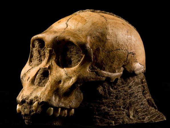 Bonobo the eye of horus - 1 3