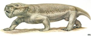 An artist drawing of a dicynodont based on bones found in Argentina.