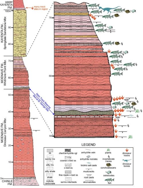"A section of the geological column from southwestern Utah showing that dinosaur tracks and found in may layers of rock presumably laid down in the middle of Noah's flood. Figure 2 from the paper: Stratigraphic section of the Moenave Formation at the St. George Dinosaur Discovery Site at Johnson Farm. Resting trace and trackway SGDS.18.T1 is in the ""Top Surface"" of the Main Track-Bearing Sandstone Bed (indicated by the blue arrow) in the Whitmore Point Member of the Moenave Formation. From: http://scienceblogs.com/gregladen/2009/03/10/a-most-amazing-set-of-spoor/"