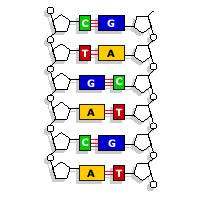DNA-gene