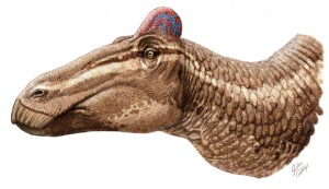 EDMONTOSAURUS REGALIS, WITH ITS COCK'S COMB. CREDIT: J. CSOTONYI