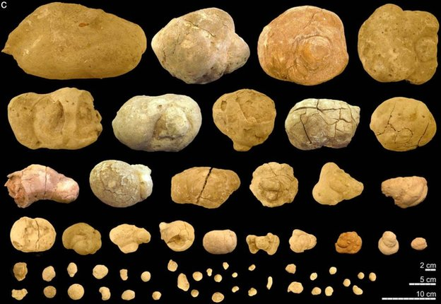 A selection of coprolite fossils from one of the communal bathrooms.  From the article