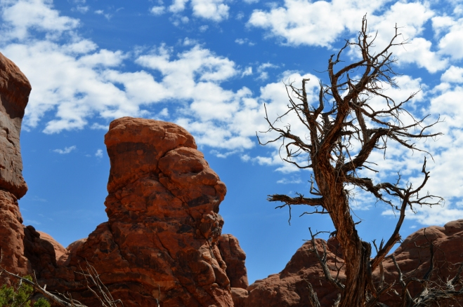 Rock and tree against blue sky near double arch in Arches National Park UT.