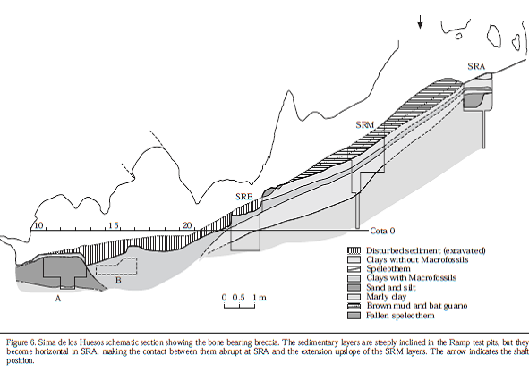 "A cross section of the pit of bones showing where excavations have taken place and the contents of the layers of sediments.   Figure is from Arsuaga et al ""Sima de los Huesos (Sierra de Atapuerca, Spain), The site"" J. Human Evolution 1997, 33:109-127."