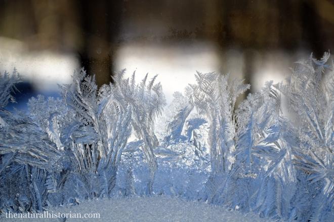 frosty-window-1000px