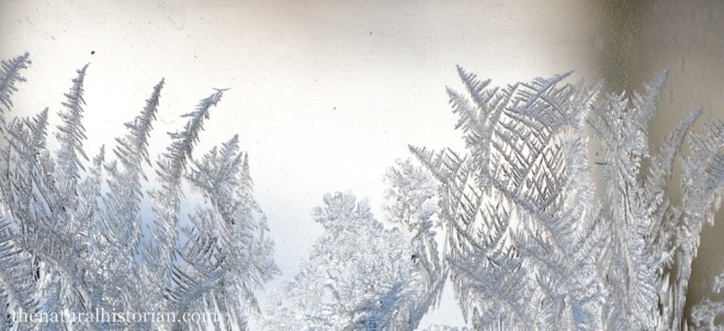 frosty-window-closeup1000px