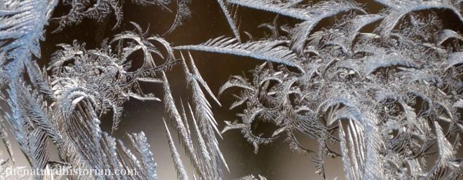 frosty-window2-cropped