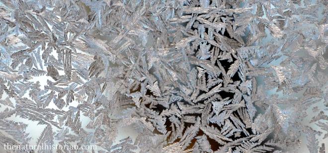 frosty-window3-1600px