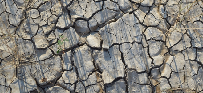 Mudcracks in Badlands National Park.  Photo: Joel Duff