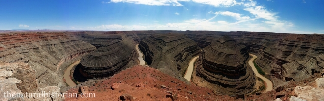 Panoramic image from the the overlook at Goosenecks of the San Juan River State Park.