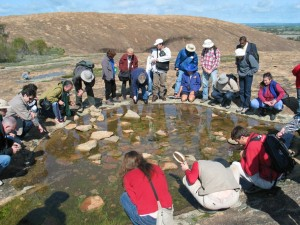 Hanging around a rock pool in Western Australia looking at clam shimp.