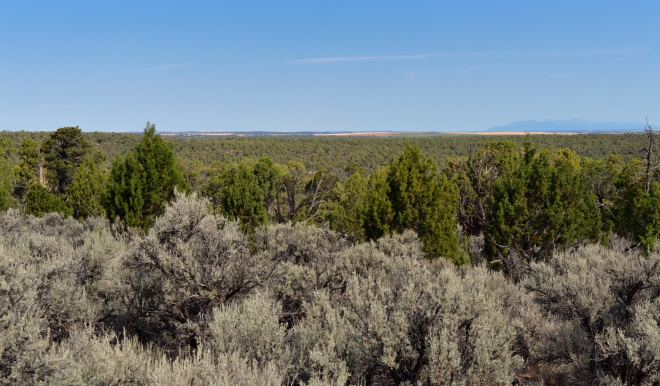 Sagebrush, junipers and blue sky.   At Lowry Ruins in Colorado on the CO/UT border.