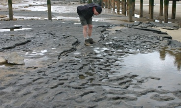 Human footprints in stone are observed during low-tide after a storm has removed the sand.  Image credit: