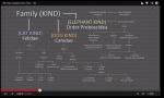 The YEC biblical evolution model.  Screen capture of a slide from Ham's presentation during the Ham/Nye debate Feb 4 2013.