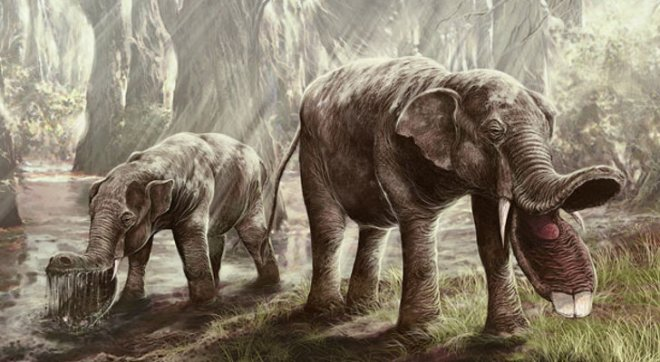 one of my favorite strange fossil elephants. Like many fossil species this one had two sets of tusks. One of the upper jaw and one on the lower jaw but in this case the lower jaw is greatly extented and the two lower tusks probably acted like shovels. Image credit: Wired / Tomasz Jedrzejowski