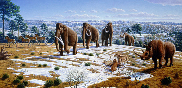 The image depicts a late Pleistocene landscape in northern Spain with woolly mammoths (Mammuthus primigenius), equids, a woolly rhinoceros (Coelodonta antiquitatis), and European cave lions (Panthera leo spelaea) with a reindeer carcass.  Image credit: Mauricio-Ant