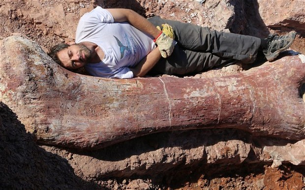 A single femur from the newly found titanosaurus. PR photo: MEF