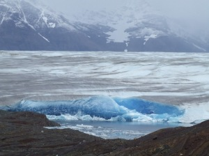 The Tyndall Glacier.  It is in the rocks exposed here that the Ichthyosaurs were found.  PR image.