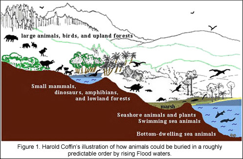 "A typical argument of ecological sorting in the fossil record because of successive drownings of ecosystems during the onset of a global flood. This one is from Harold Coffin in ""Origin by Design"" from 1983. Image from:"