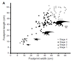 Figure showing 127  measured hadrosaur footprints from the Denali site in Alaska.  This figure if from Fiorillo et al. Geology 2014.