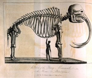 "A ""Young Mammouth"" unearthed by Charles Willson Peale on display at the Philadelphia museum in 1821."