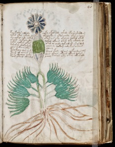 A plant? from the Voynich manuscript written in the 15th century.  Was the author thinking of alien worlds when he wrote and illustrated this book?  The book has defied translation and interpretation since its discovery. The plants are so bizarre we would be hard-pressed to imagine anything more alien today.