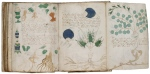 Plants? from the Voynich manuscript from the 15th century.  The meaning of the images and text are still unknown.