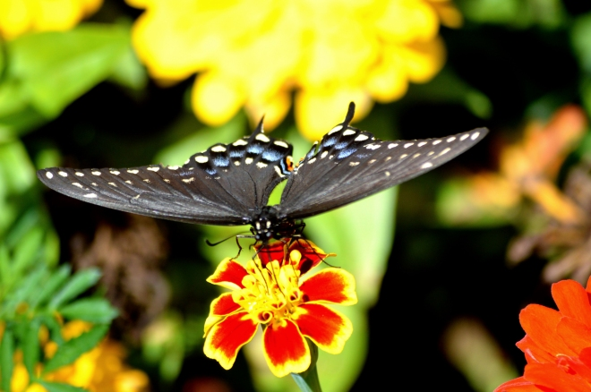 butterfly3-church-1400px