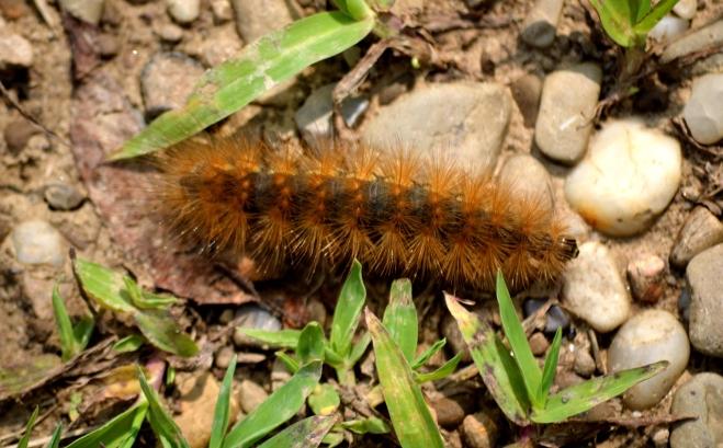 Caterpillar-springfieldbog1500