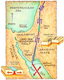 For 20 million years the floor of the Red Sea has been spreading apart and the Arabian plate has been pivoting northward with respect to the Sinai subplate and its parent, the African plate. By 2 million to 3 million years ago the movement along the fault had created a deep, lush, navigable valley. Map by Patricia J. Wynne