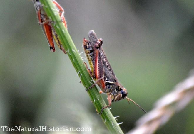 grasshopper-boettler-park-1800px