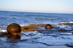Concretions resist erosion on rocks of Sunset Cliffs near San Diego.  Image taken on Nov 21, 2014 by Joel Duff
