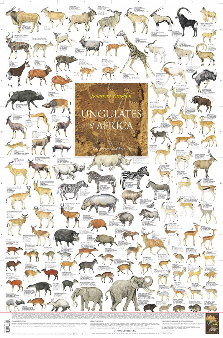 an analysis of the many types of animals in africa Usda offers various resources on animal production, including animal research programs, data and statistics on meats and poultry, alternative farming trends, livestock identification to the general public, and range programs.