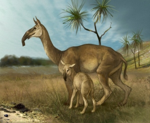 Wikipedia Macrauchenia a South American fossil ungulate.