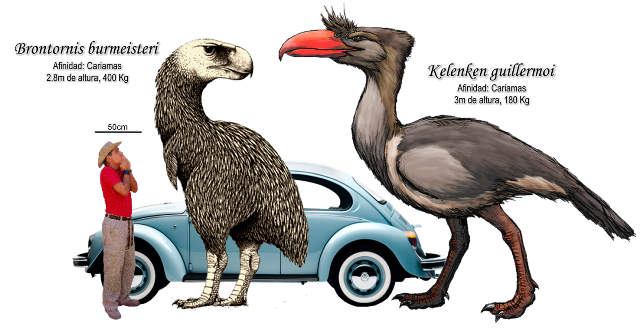 Reconstructions of two terror birds from South America. These flightless birds only lived in South America.  These are birds you would want to meet without some protection.   The lack of predators in South America probably helped to allow these birds to grow to such enormous size.  Image from http://palaeos-blog.blogspot.co.uk/2010/12/titanes-aves.html