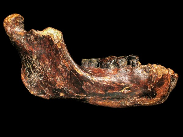 sn-fossilH-Jawbone-Taiwan